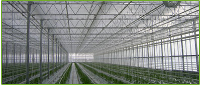 J.C. van der Spek Greenhouse Services – Greenhouse builder, Greenhouse repair, Greenhouse parts